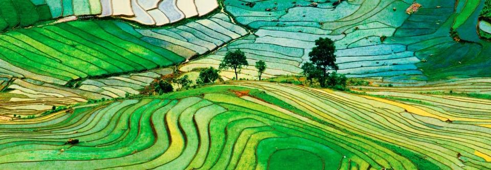 scenic-rice-field-discoveryindochina.com